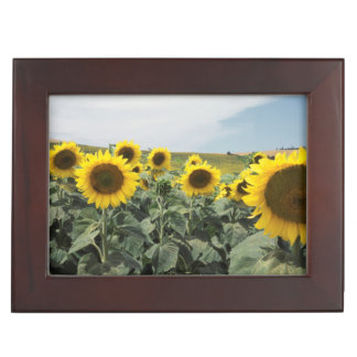 France Provence, View of sunflowers field Keepsake Box
