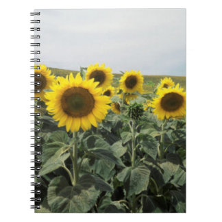 France Provence, View of sunflowers field Notebook