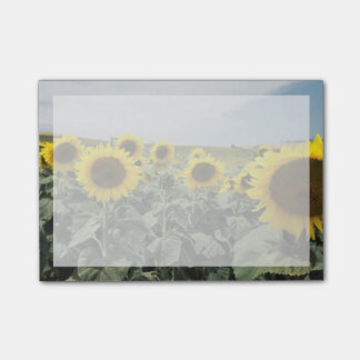 France Provence, View of sunflowers field Post-It Note