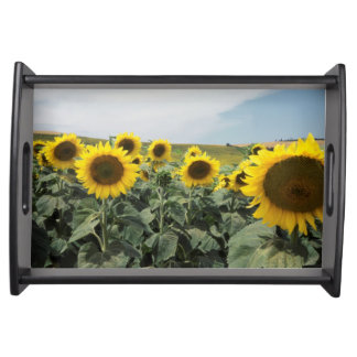 France Provence, View of sunflowers field Serving Tray