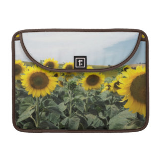 France Provence, View of sunflowers field Sleeve For MacBook Pro