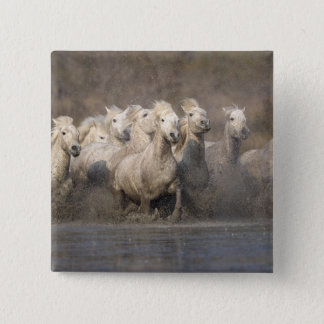 France, Provence. White Camargue horses running 15 Cm Square Badge