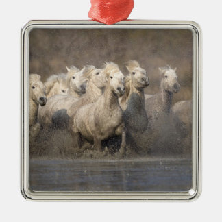 France, Provence. White Camargue horses running Christmas Ornament