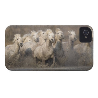 France, Provence. White Camargue horses running iPhone 4 Case-Mate Cases