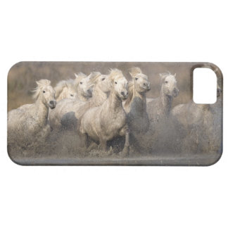 France, Provence. White Camargue horses running iPhone 5 Cases