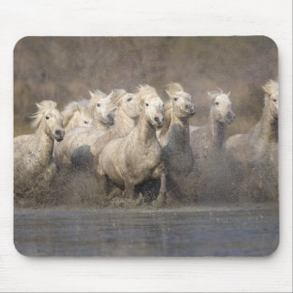 France, Provence. White Camargue horses running Mouse Mat