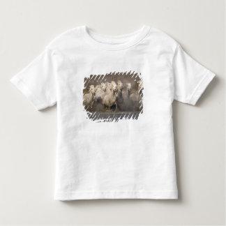 France, Provence. White Camargue horses running Toddler T-Shirt