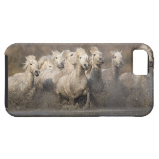 France, Provence. White Camargue horses running Tough iPhone 5 Case
