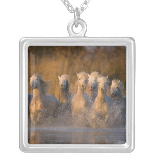 France, Provence. White Camargue horses Silver Plated Necklace