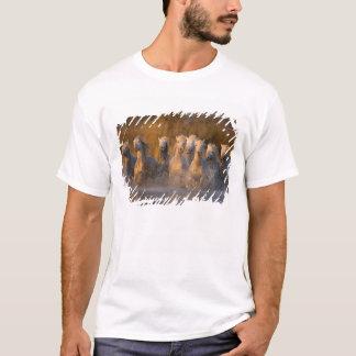 France, Provence. White Camargue horses T-Shirt