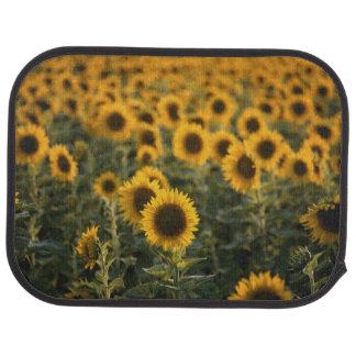France, Vaucluse, sunflowers field Car Mat
