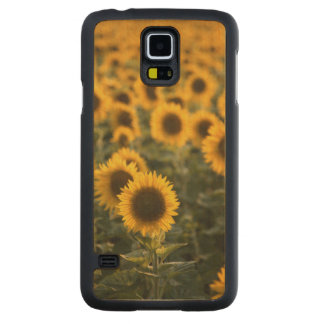 France, Vaucluse, sunflowers field Carved Maple Galaxy S5 Case