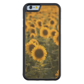France, Vaucluse, sunflowers field Carved Maple iPhone 6 Bumper Case