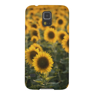 France, Vaucluse, sunflowers field Cases For Galaxy S5