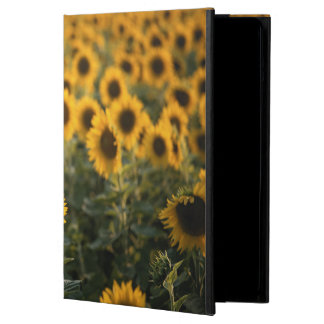 France, Vaucluse, sunflowers field iPad Air Cover