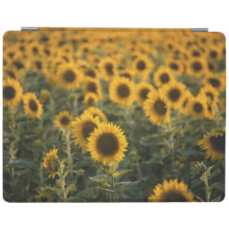France, Vaucluse, sunflowers field iPad Cover