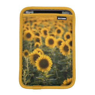 France, Vaucluse, sunflowers field iPad Mini Sleeve