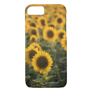 France, Vaucluse, sunflowers field iPhone 7 Case