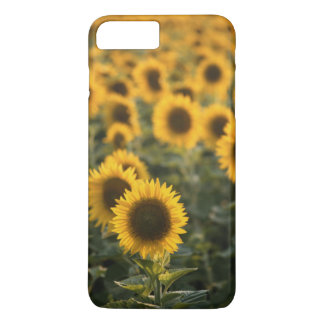 France, Vaucluse, sunflowers field iPhone 8 Plus/7 Plus Case