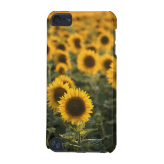 France, Vaucluse, sunflowers field iPod Touch 5G Cases
