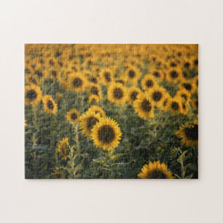 France, Vaucluse, sunflowers field Jigsaw Puzzle