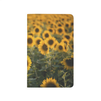 France, Vaucluse, sunflowers field Journal