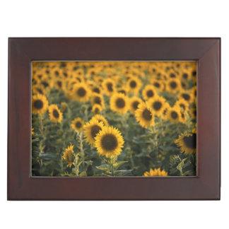 France, Vaucluse, sunflowers field Keepsake Box
