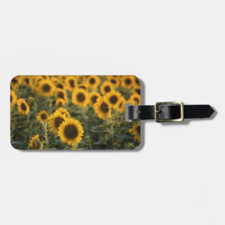 France, Vaucluse, sunflowers field Luggage Tag