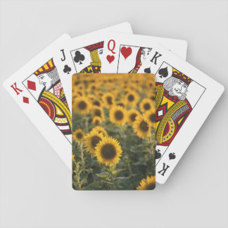 France, Vaucluse, sunflowers field Playing Cards