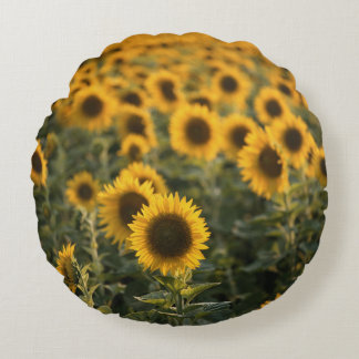 France, Vaucluse, sunflowers field Round Cushion