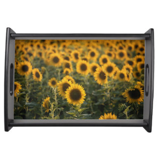 France, Vaucluse, sunflowers field Serving Tray