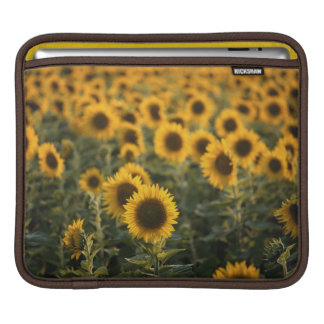 France, Vaucluse, sunflowers field Sleeves For iPads