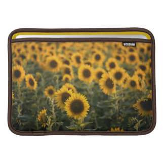 France, Vaucluse, sunflowers field Sleeves For MacBook Air
