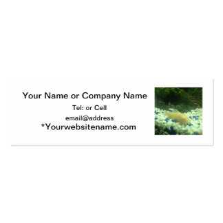 Francis the albino catfish business cards