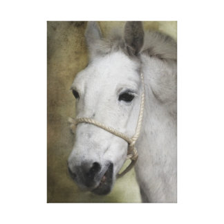 Francis the Mule Stretched Canvas Print