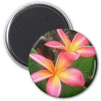 Frangipani 6 Cm Round Magnet