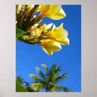 Frangipani and Coconut Palm Print