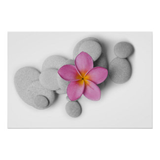 Frangipani and Pebbles Poster