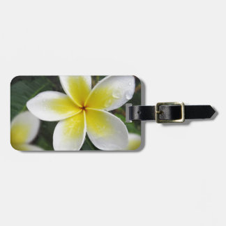 Frangipani And Raindrops luggage tag