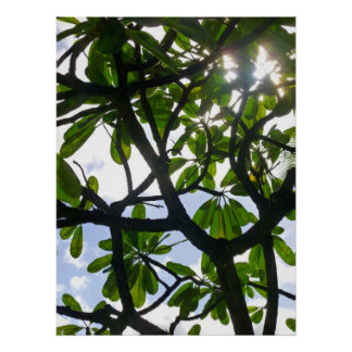 Frangipani Branches Poster