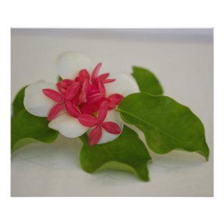 Frangipani Flower Arrangement Photographic Print