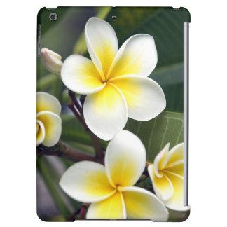 Frangipani flower Cook Islands