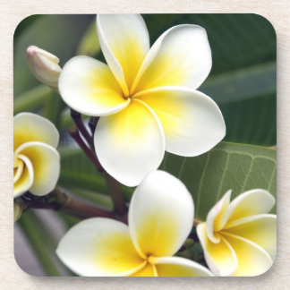 Frangipani flower Cook Islands Beverage Coasters