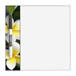 Frangipani flower Cook Islands Dry Erase Board