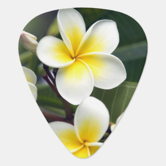 Frangipani flower Cook Islands Guitar Pick