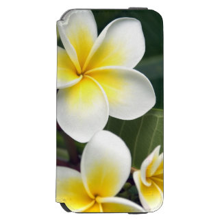 Frangipani flower Cook Islands Incipio Watson™ iPhone 6 Wallet Case
