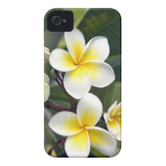 Frangipani flower Cook Islands iPhone 4 Cases