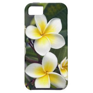 Frangipani flower Cook Islands iPhone 5 Covers
