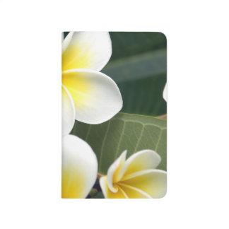 Frangipani flower Cook Islands Journals
