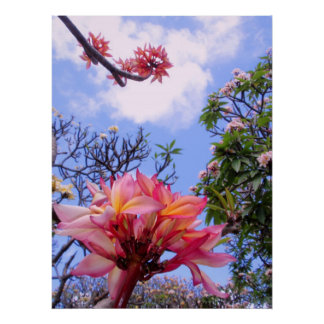 Frangipani Gardens Poster